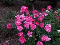 Kl. Blumengarten